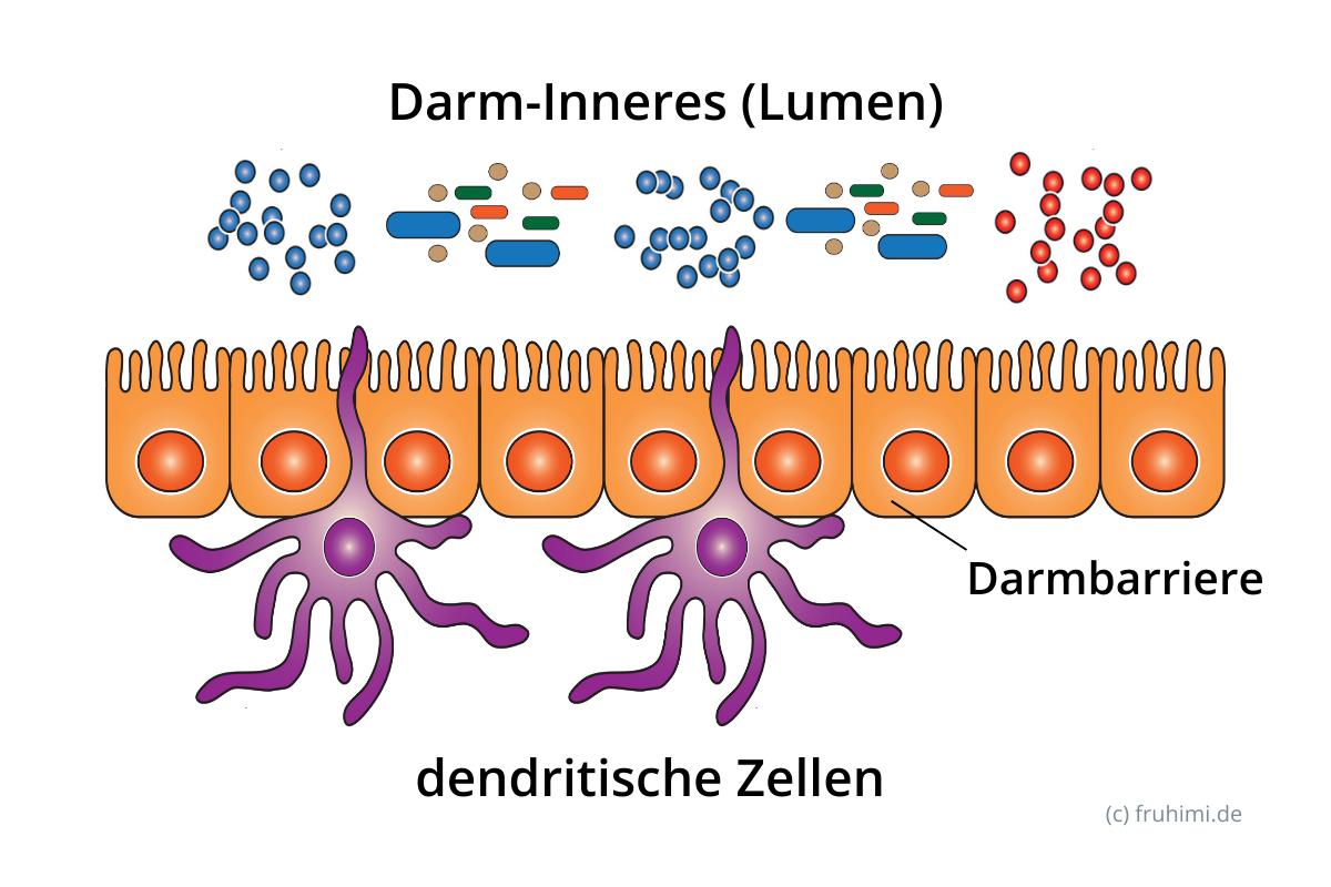 Dendritische Zellen